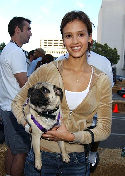 Jessica Alba with pug