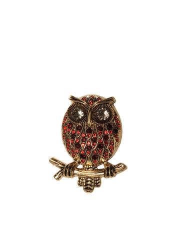 Zara owl